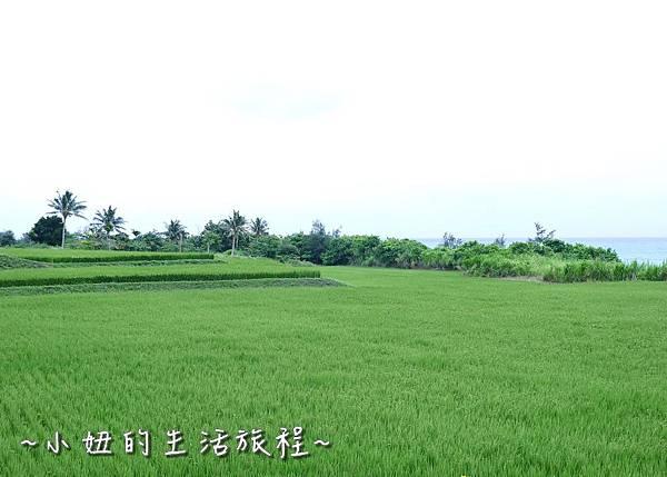 台東景點 台東自行車 P1270178.jpg