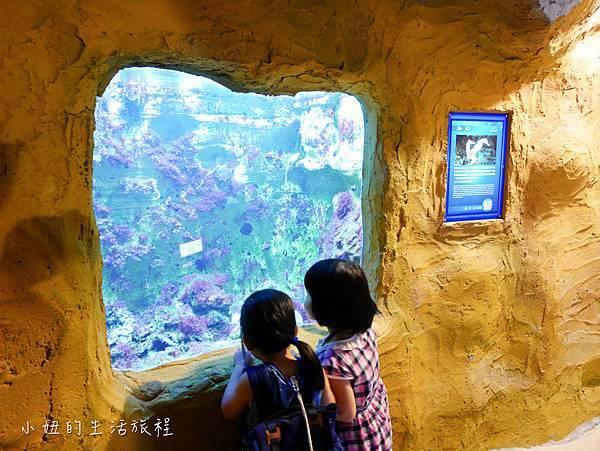 野柳海洋世界-20.jpg