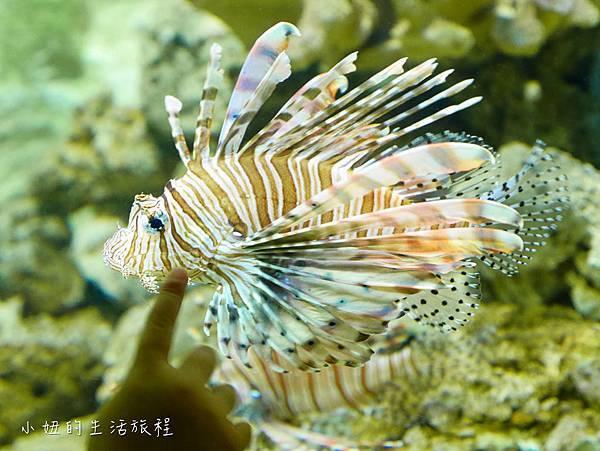 野柳海洋世界-24.jpg