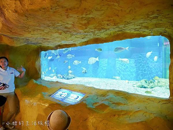 野柳海洋世界-25.jpg