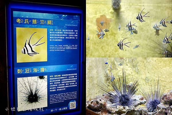 野柳海洋世界-61.jpg