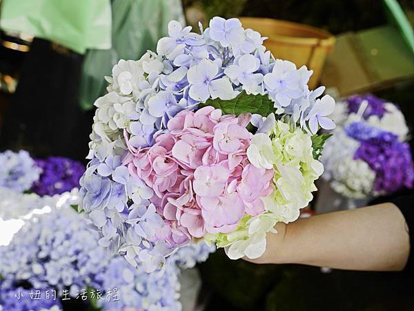 陽明山 高家繡球花田-28.jpg