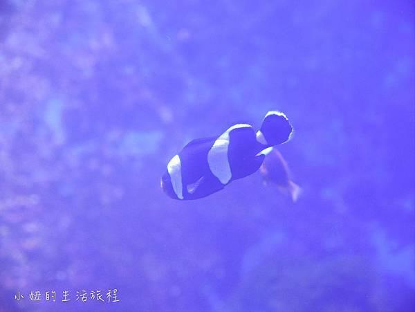 台東夢想館-16.jpg