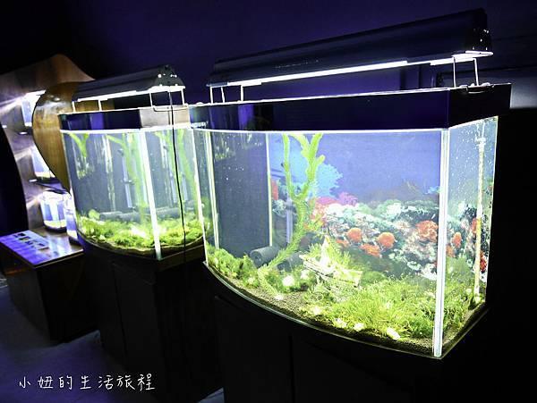 台東夢想館-28.jpg