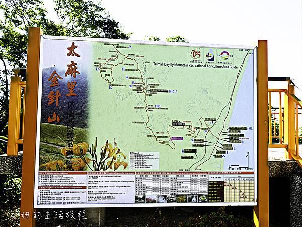 2017台東金針花-1.jpg