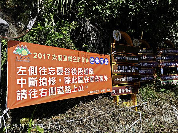 2017台東金針花-6.jpg