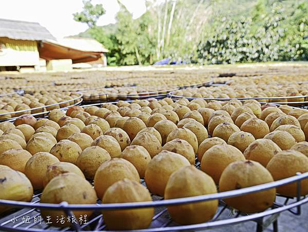新埔味衛佳柿餅觀光農場,味衛佳,新竹-3.jpg