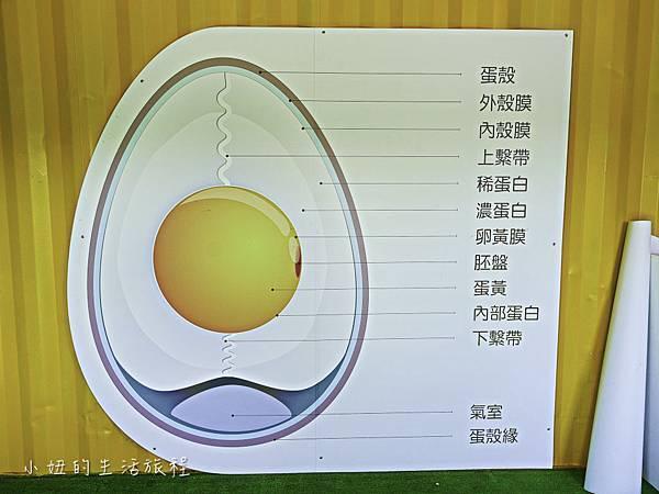 淡水蛋蛋節,蛋蛋節-25.jpg