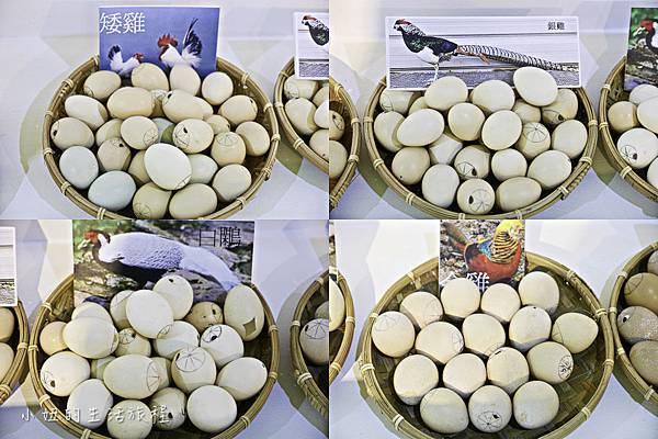 淡水蛋蛋節,蛋蛋節-69.jpg