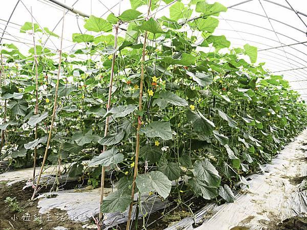 台糖有機蔬果,台糖有機米-4.jpg