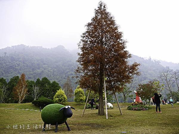 南庄雲水度假森林,落羽松,新竹-3.jpg