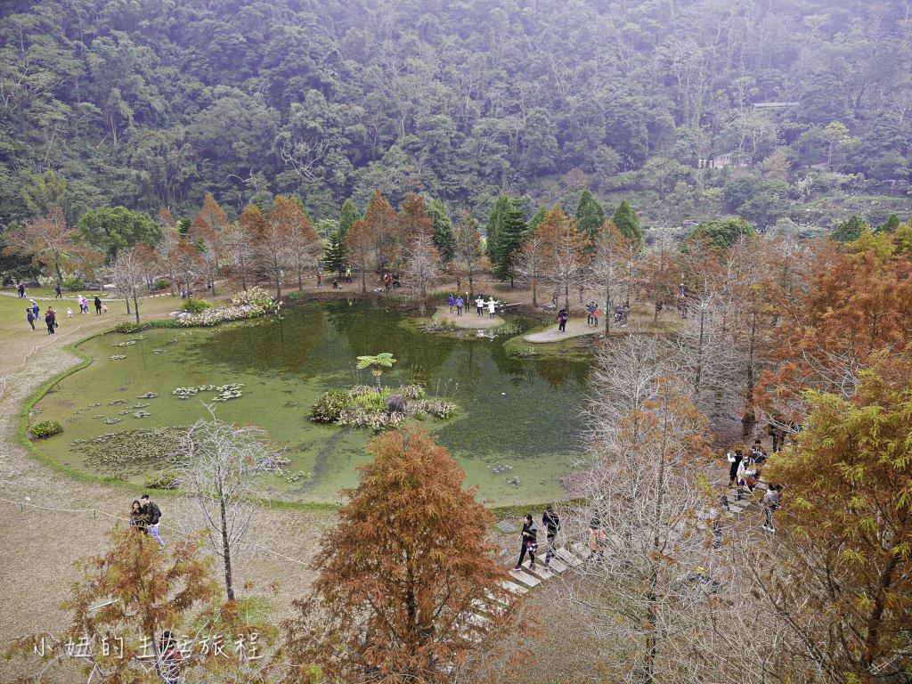 南庄雲水度假森林,落羽松,新竹-7.jpg