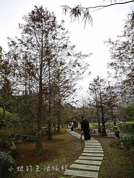 南庄雲水度假森林,落羽松,新竹-8.jpg
