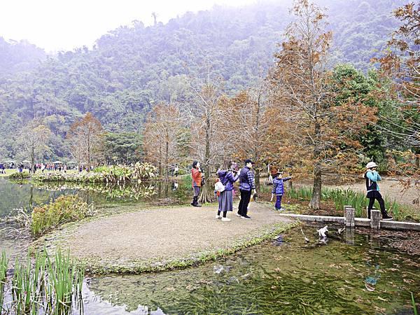 南庄雲水度假森林,落羽松,新竹-10.jpg