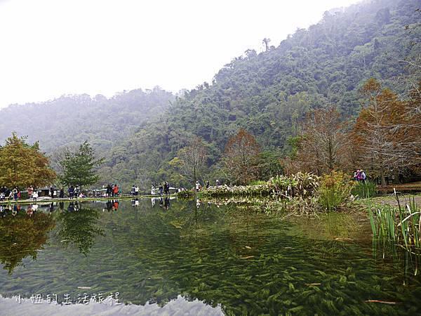 南庄雲水度假森林,落羽松,新竹-11.jpg