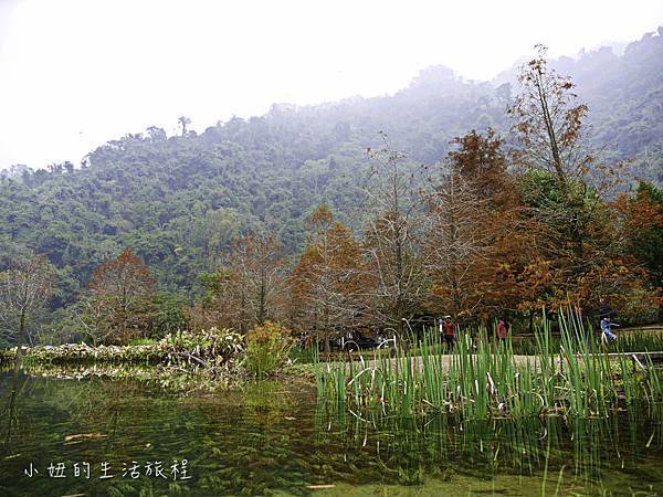 南庄雲水度假森林,落羽松,新竹-15.jpg