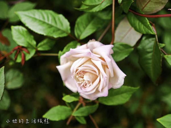 花博,新生公園,迷宮公園,迷宮花園-22.jpg