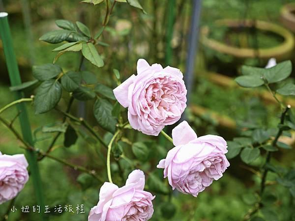 花博,新生公園,迷宮公園,迷宮花園-29.jpg