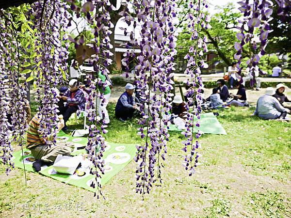 九州,中山大藤,紫藤花.交通-12.jpg
