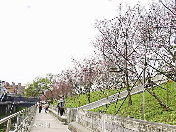 樂活公園,內湖特色公園,內溝溪,賞櫻,內湖,櫻花-6.jpg