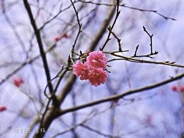 樂活公園,內湖特色公園,內溝溪,賞櫻,內湖,櫻花-7.jpg