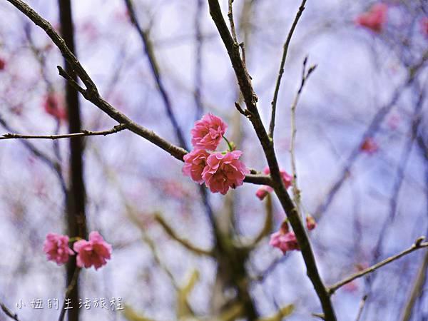 樂活公園,內湖特色公園,內溝溪,賞櫻,內湖,櫻花-8.jpg