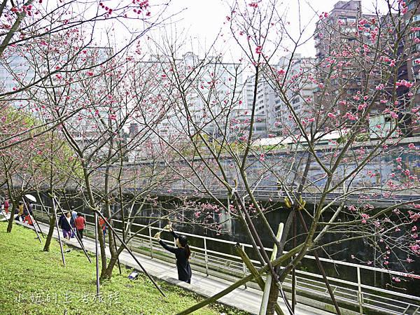 樂活公園,內湖特色公園,內溝溪,賞櫻,內湖,櫻花-9.jpg