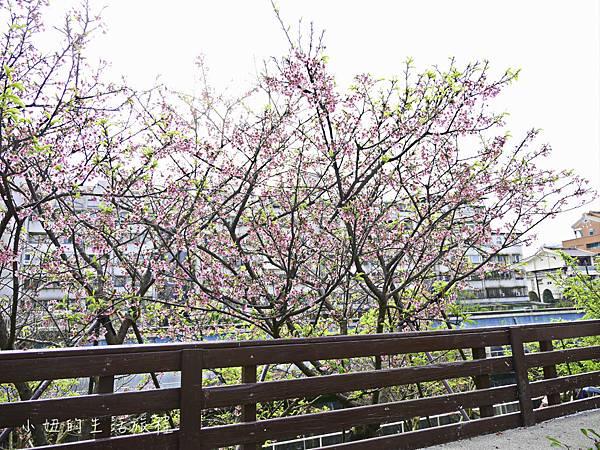 樂活公園,內湖特色公園,內溝溪,賞櫻,內湖,櫻花-11.jpg