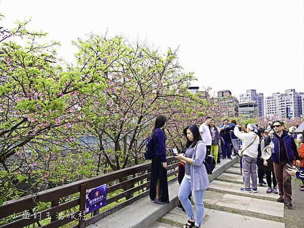樂活公園,內湖特色公園,內溝溪,賞櫻,內湖,櫻花-14.jpg