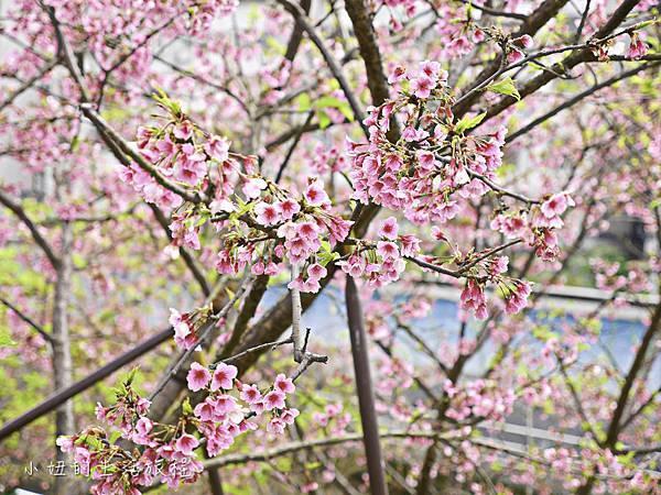 樂活公園,內湖特色公園,內溝溪,賞櫻,內湖,櫻花-18.jpg