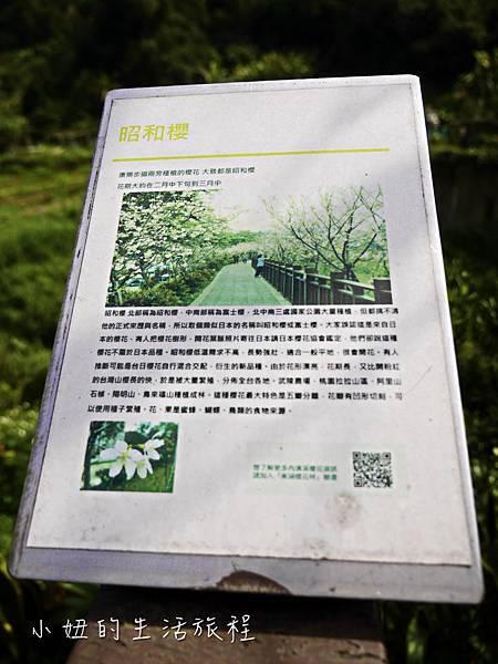 樂活公園,內湖特色公園,內溝溪,賞櫻,內湖,櫻花-21.jpg
