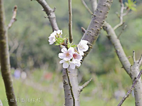 樂活公園,內湖特色公園,內溝溪,賞櫻,內湖,櫻花-22.jpg