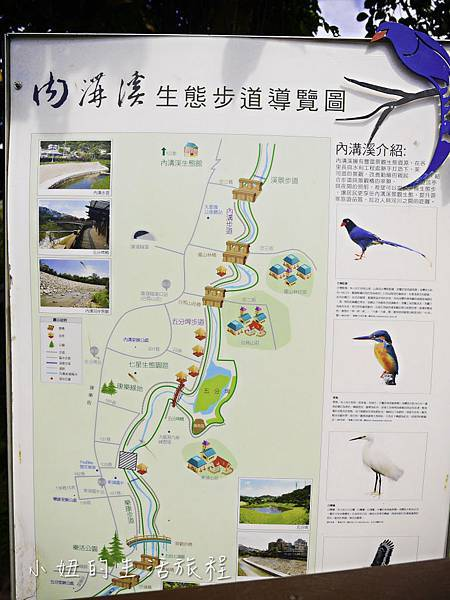 樂活公園,內湖特色公園,內溝溪,賞櫻,內湖,櫻花-25