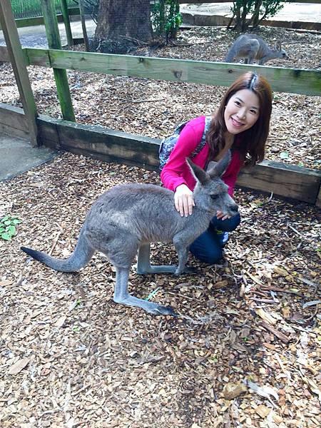 澳洲,紐西蘭,WIFI (1-8).jpg