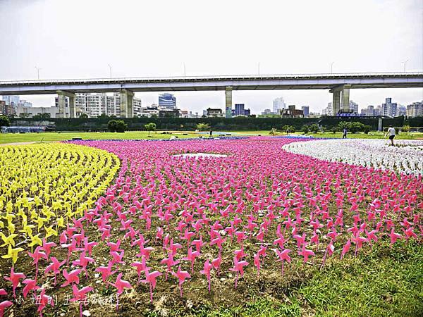 板橋江翠礫間,蝴蝶公園,風車-64.jpg