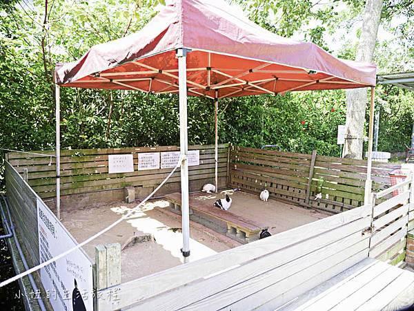 溝貝親子休閒農莊,新竹親子景點-5.jpg