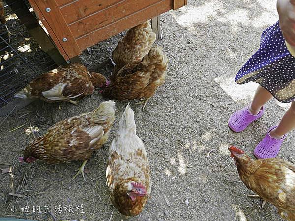 溝貝親子休閒農莊,新竹親子景點-23.jpg