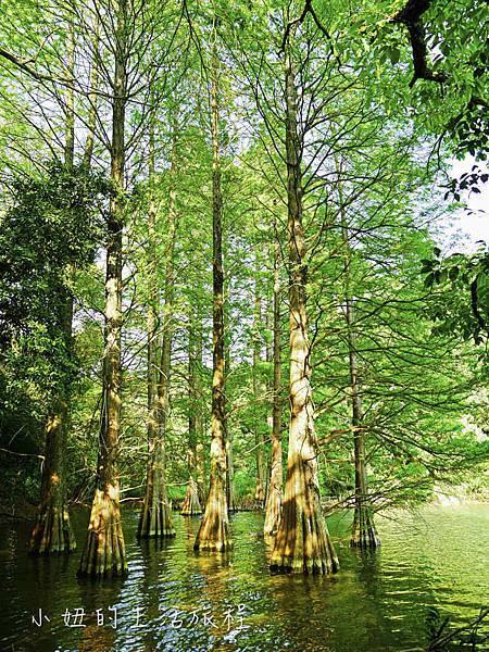 篠栗九大の森,福岡-3.jpg