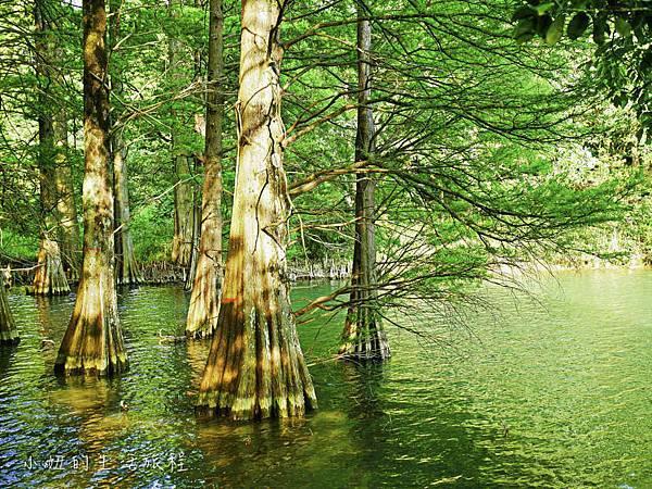 篠栗九大の森,福岡-6.jpg