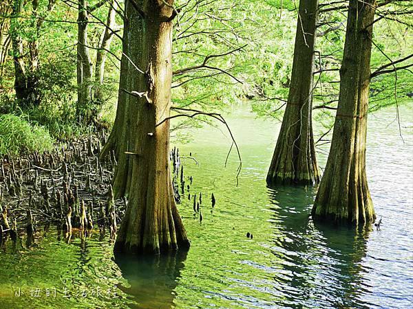 篠栗九大の森,福岡-7.jpg