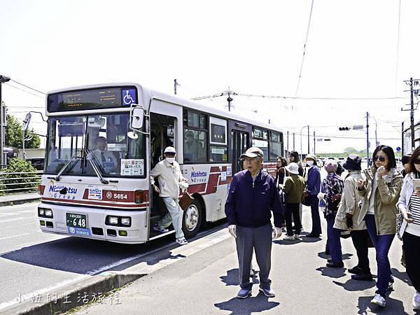 九州,中山大藤,紫藤花.交通-2