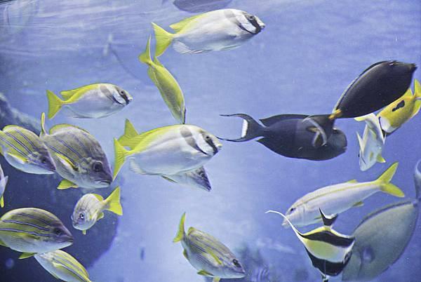 沖繩美麗海水族館-5.jpg