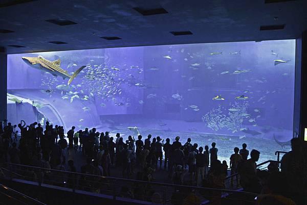 沖繩美麗海水族館-8.jpg
