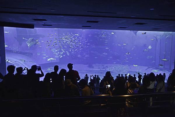 沖繩美麗海水族館-10.jpg