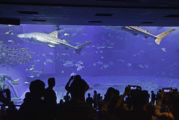 沖繩美麗海水族館-11.jpg