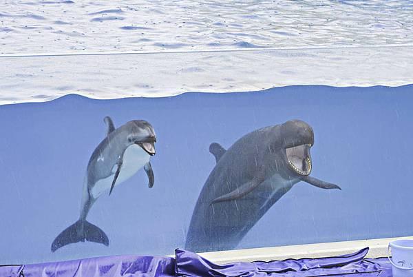 沖繩美麗海水族館-15.jpg