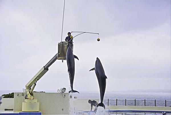 沖繩美麗海水族館-17.jpg