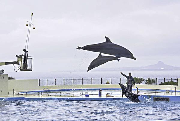 沖繩美麗海水族館-18.jpg