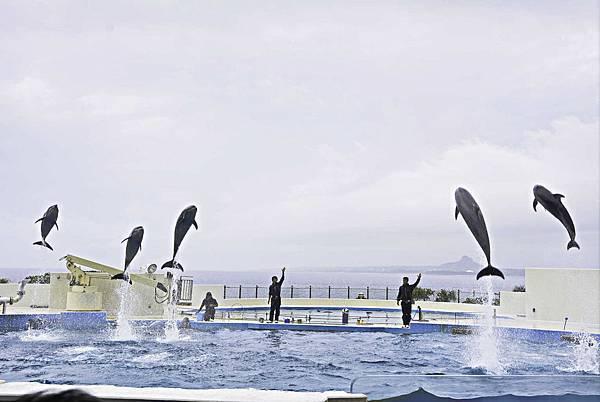 沖繩美麗海水族館-19.jpg