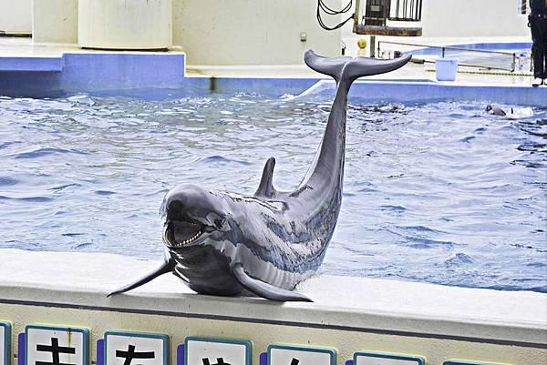 沖繩美麗海水族館-20.jpg